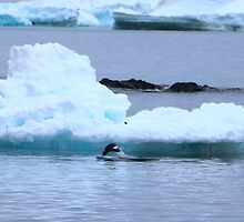 Adelie Penguins in Antarctica, 9 by Janai-Ami