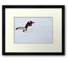 Penguin Highway Framed Print