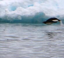 Adelie Penguins in Antarctica,  11  by Janai-Ami