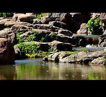 Hidden Oasis in Devil's Canyon by Vicki Pelham