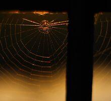 Gold Threaded Webs by Salien