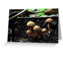 brown mushrooms on a fallen branch Greeting Card
