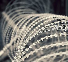 Barb wire by ernstc