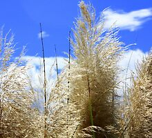 Pampas Grass by AuntDot