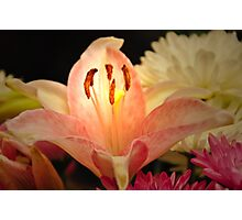 Pink Lily Edited Photographic Print