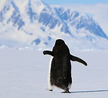 Adelie Penguins in Antarctica,   18 by Janai-Ami