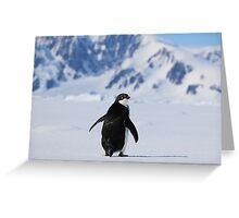Adelie Penguins in Antarctica,   20 Greeting Card