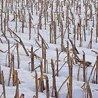 Winter Corn Field by clizzio