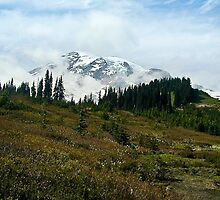 Mt. Rainier from Paradise by Barb White
