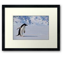 Adelie Penguin in Antarctica,   23 Framed Print