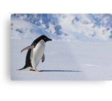 Adelie Penguin in Antarctica,   23 Metal Print