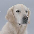 Ditte in snowy weather by Trine