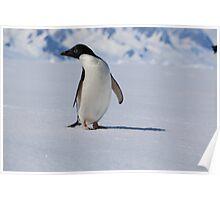 Adelie Penguins in Antarctica,   24 Poster