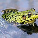 Pensive frog by Roxane Bay