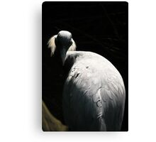 White Crane Seeks Enlightenment Canvas Print