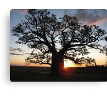 Boab tree silhouette at sunset Canvas Print