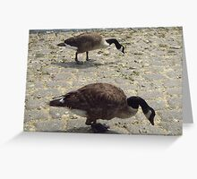 Geese Twins Greeting Card