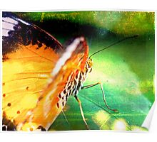 Butterfly with Texture Poster