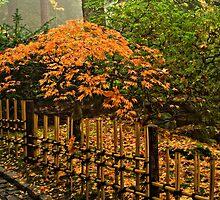 Autumn Glory by TeresaB