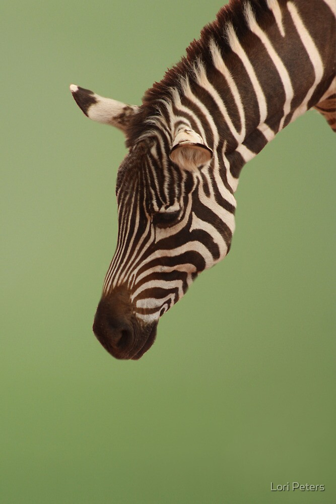 Zebra by Lori Peters