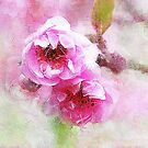 Cherry Blossom by © Helen Chierego