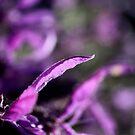 Lavender Flower 2 by Steven Carpinter
