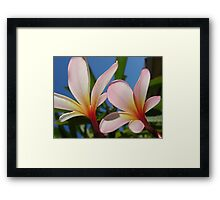 White & Pink Frangipani Glow-(Duo)-(Landscape) Framed Print