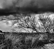 Rain expected in Dune by Gary Heald LRPS