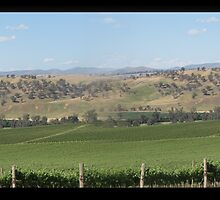 Vineyard @ Jugiong by Kelly Piper