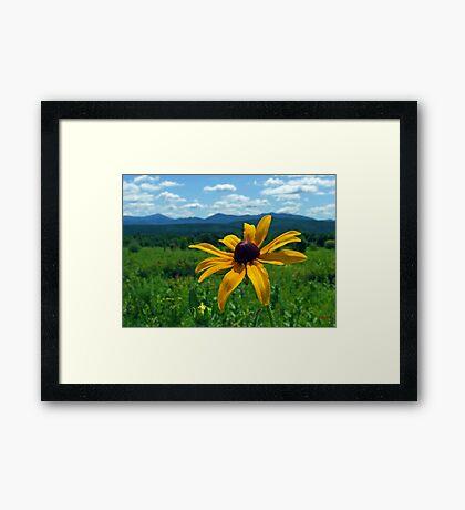 Black Eye of the Adirondacks Framed Print