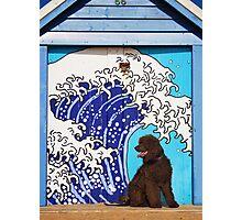 Sedge at Brighton Photographic Print
