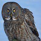 Great Gray Owl Portrait II by Skye Ryan-Evans