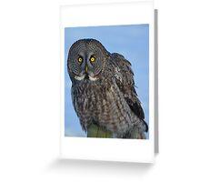 Great Gray Owl Portrait II Greeting Card