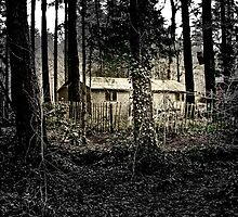 Gem in the Woods by Catherine Hamilton-Veal  ©