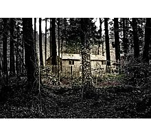 Gem in the Woods Photographic Print