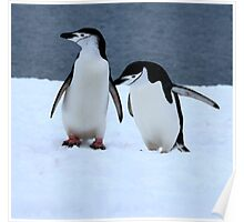 Chinstrap penguins in Antarctica, 2 Poster