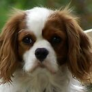Louis 1 yr up close and personal by BronReid