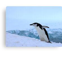 Chinstrap penguin in Antarctica, 4 Canvas Print