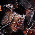 Leaf Litter by James Coard