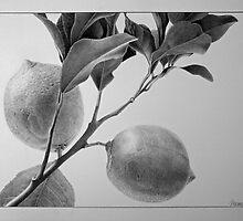 Lemons by Dietrich Moravec