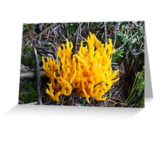 the crown of fungi Greeting Card