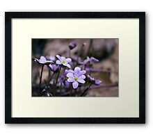 FIRST FLOWER OF SPRING Framed Print