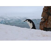 Chinstrap penguins in Antarctica,    7 Photographic Print