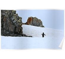 Chinstrap penguins in Antarctica,    8 Poster