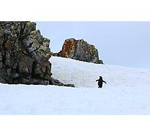 Chinstrap penguins in Antarctica,    8 Photographic Print