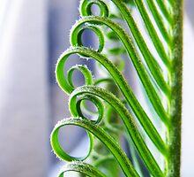 Cycad Curls by LouJay