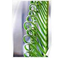 Cycad Curls Poster