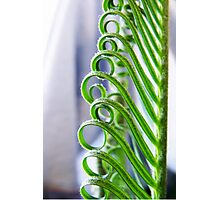 Cycad Curls Photographic Print