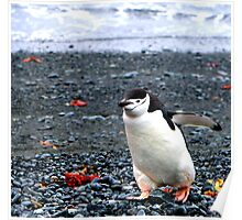 Chinstrap penguins in Antarctica,    10 Poster