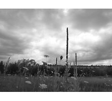 STAND TALL Photographic Print
